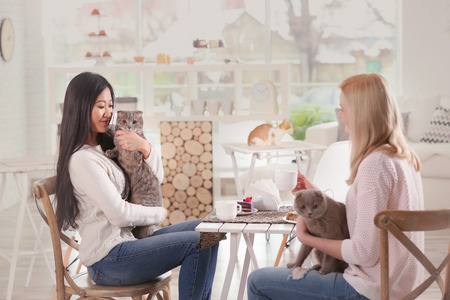 Photo for Happy women resting in cat cafe - Royalty Free Image