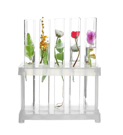 Foto de Test tubes with plants in holder, isolated on white - Imagen libre de derechos