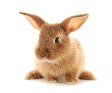 Foto de Cute fluffy bunny on white background - Imagen libre de derechos