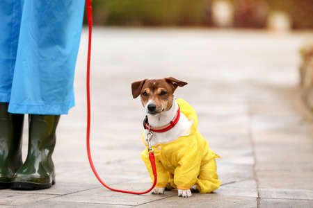 Funny dog and owner in raincoats walking outdoors