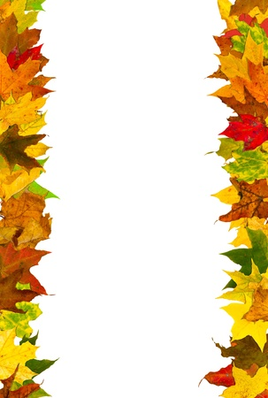 Photo for Autumn leaves frame, isolated on white. - Royalty Free Image