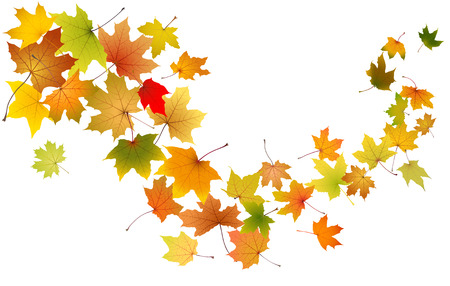 Maple autumn falling leaves, vector illustration