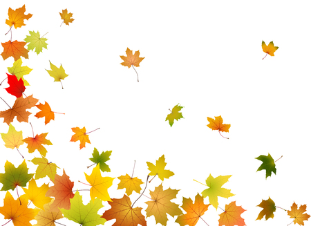 Illustration for Maple autumn falling leaves, vector illustration. - Royalty Free Image