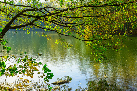 Photo for Tree Branch with Colorful Leaves  over Lake in Autumn Time - Royalty Free Image