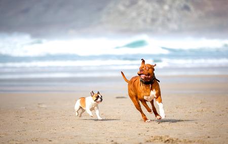 Photo pour dogs playing on the beach - image libre de droit