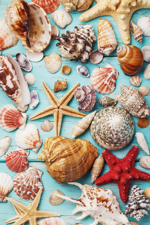 Photo for Background from the collection of various sea shells on a wooden board, top view - Royalty Free Image