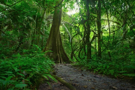 Jungle forest scenic background  Big trees and green plants mystery landscape in Thailand national park  Wild tropical nature