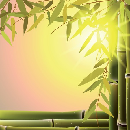 Illustration pour Bamboo trees and leaves at sunset time. Vector illustration. - image libre de droit