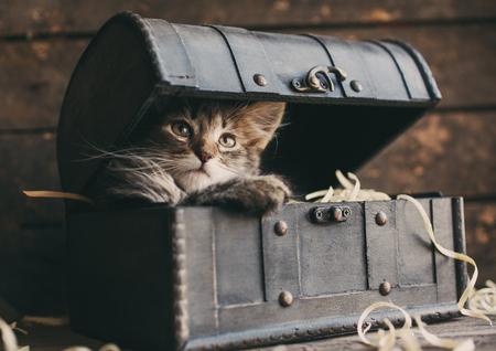 Photo pour Fluffy kitten in an open vintage chest - image libre de droit