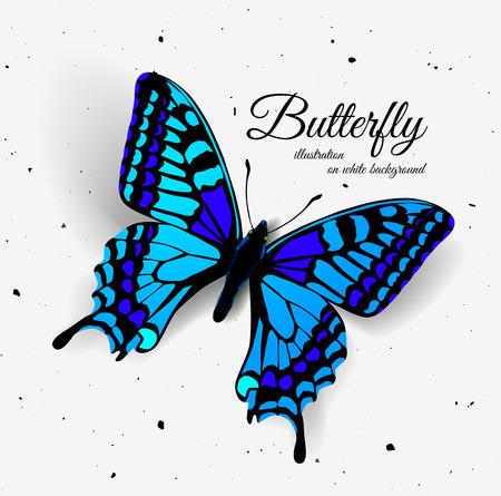 Ilustración de Realistic butterfly. Vector illustration of a top view - Imagen libre de derechos