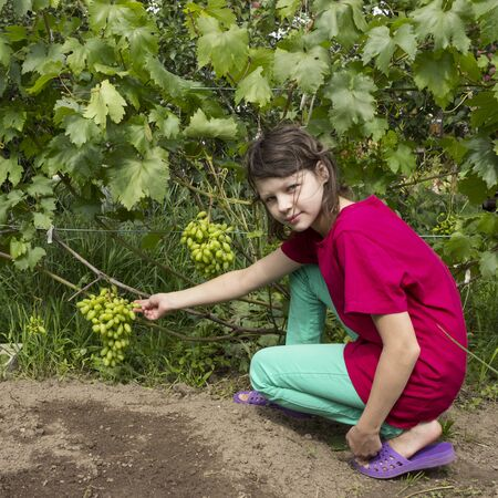 Foto de Girlie in summer garden tries green grape variety - Imagen libre de derechos