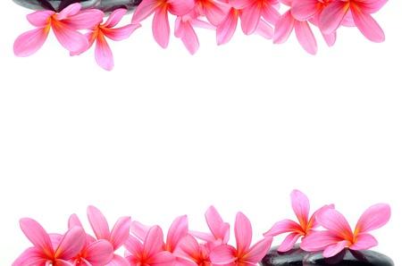 Foto de Beautiful Frangipani flowers - border design - Imagen libre de derechos