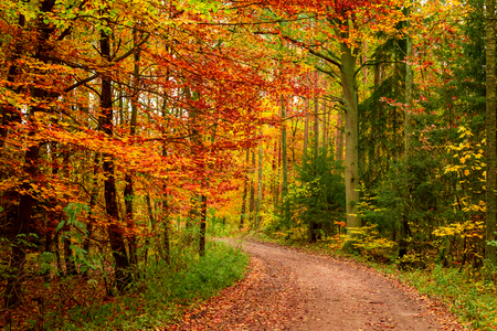 Photo pour Yellow and green autumn in the forest, Europe - image libre de droit