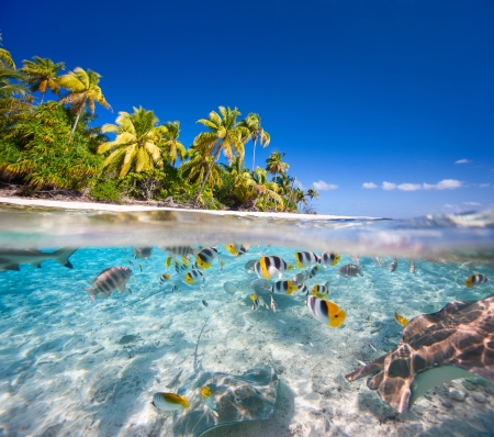 Photo pour Beautiful tropical island in French Polynesia under and above water - image libre de droit