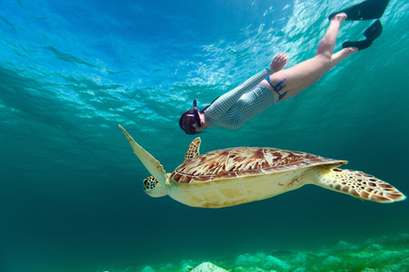 Photo for Underwater photo of young woman snorkeling and swimming with Hawksbill sea turtle - Royalty Free Image