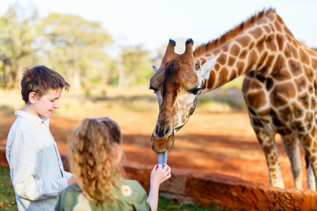 Photo pour Kids brother and sister feeding giraffes in Africa - image libre de droit