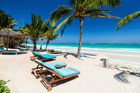 Photo for Beach beds among palm trees at perfect tropical coast - Royalty Free Image
