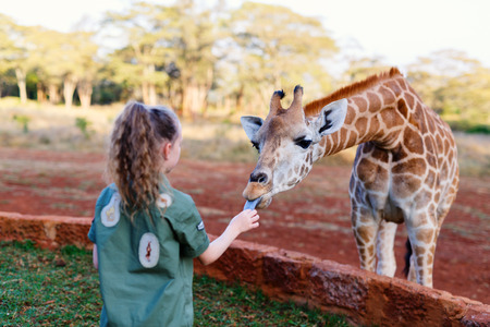 Photo for Cute little girl feeding giraffes in Africa - Royalty Free Image