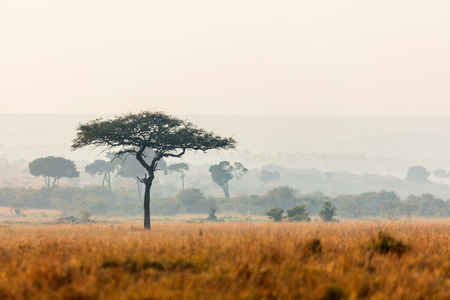 Photo for Beautiful landscape of Masai Mara at sunset or sunrise - Royalty Free Image
