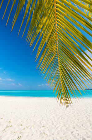 Photo for Perfect tropical white sand beach with coconut palm - Royalty Free Image