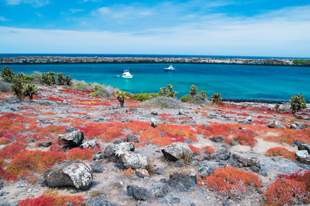 Foto de Beautiful landscape of Galapagos South Plaza island covered with endemic succulent sesuvian grass - Imagen libre de derechos