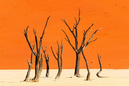 Photo for Dead camelthorn trees against red dunes in Deadvlei Namibia - Royalty Free Image