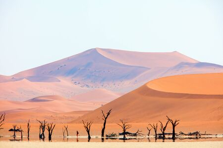 Photo for Mirage at Deadvlei Namibia where dried out camelthorn trees surrounded by red sand dunes - Royalty Free Image