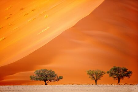 Photo for Close up of beautiful red sand dune in Sossusvlei in Namibia - Royalty Free Image