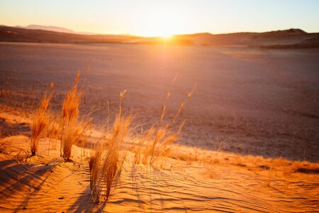 Photo pour Stunning sunset over red sand dunes in Namib desert - image libre de droit