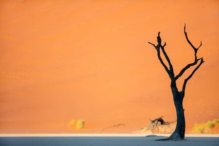 Photo for Dead camelthorn trees against red dunes early in the morning in Deadvlei Namibia - Royalty Free Image