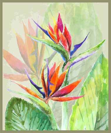 Illustration for Greeting card with Bird of Paradise flowers. Illustration tropical flower Bird of Paradise. - Royalty Free Image
