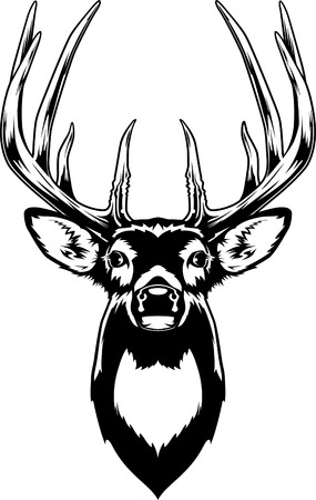 Illustration pour Whitetail Deer Head - image libre de droit