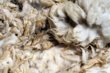 The heap of dirty sheep wool on the stall