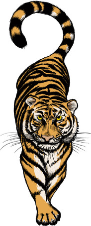 Vector illustration of Crouching Tiger isolated on white