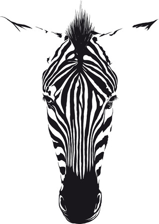 Ilustración de Zebra head from the front consisting of black lines on a white background - Imagen libre de derechos