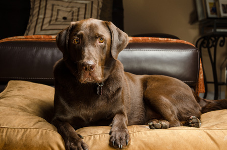 Photo for Nice Pet Dog - Royalty Free Image