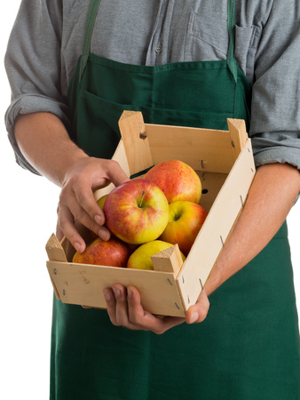 Farmer with green apron and grey shirt holding crate with fresh harvested apples isolated on white background