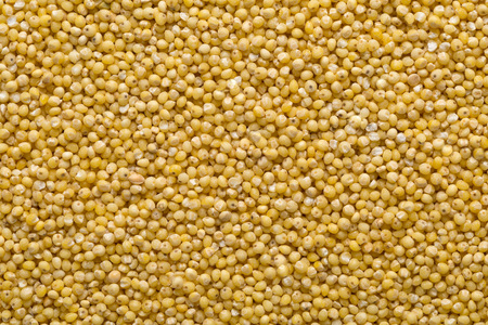 Photo for Golden millet, a gluten free grain seed, frame filling background texture - Royalty Free Image