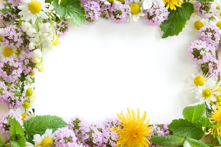 Photo for frame of herbal flowers - Royalty Free Image