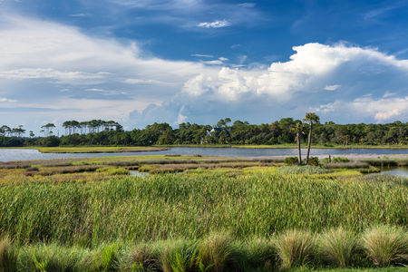 Photo for The spectacular Barrier Island of Kiawah showing water inlets, marshes, forests, coupled with a beautiful blue sky and puffy clouds in early evening. - Royalty Free Image