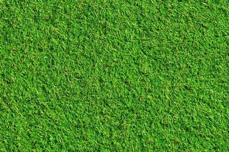 Photo pour Nice green grass - image libre de droit