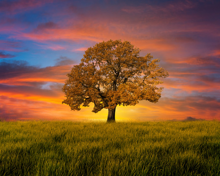 Photo pour Alone tree in the field with clouds - image libre de droit