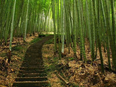 Green Bamboo -- a path leads mural