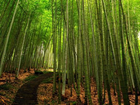 Bamboo Forest -- with a hiking path, located in Taiwan
