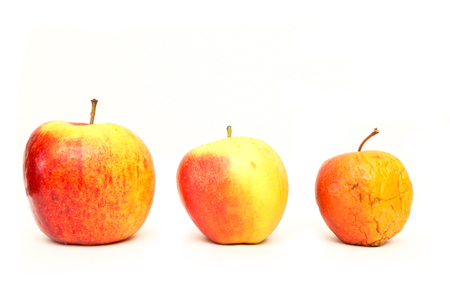 Photo pour A picture of three ordinary apples, without modifications..as you know from the shop. The picture shows the maturing of the apples. One is fresh, one is older and one is dry. - image libre de droit
