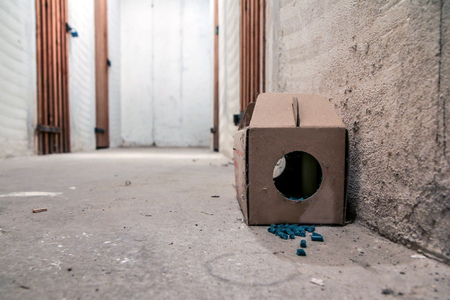 Foto de A picture of a paper rat trap with some pellets with poison outside of the box. Dangerous to touch or eat. - Imagen libre de derechos