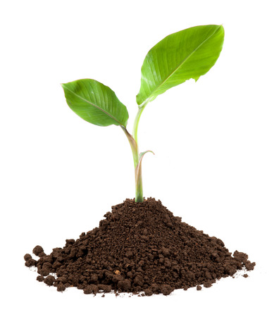 Photo pour new sprout and dirt isolated on white - image libre de droit