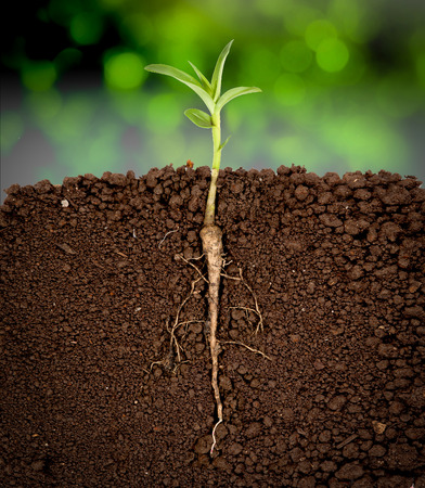 Photo for Growing plant with underground root visible,sunny trees background - Royalty Free Image