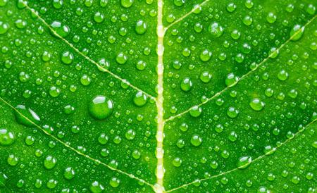 Foto de Green leaf with drops of water - Imagen libre de derechos