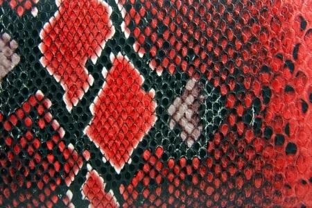 snake skin background close up detail